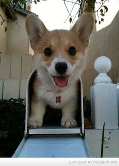 Mail Time! Makes me want a corgi :)