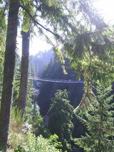The 11 Most Popular Things to Do in Vancouver: Capilano Suspension Bridge