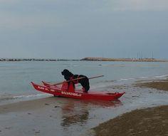Terranova di 4 anni Barry White presso il Lido Playa del Sol , San salvo marina ( ch )