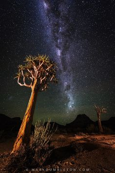 Milky Way over Kokerboomkloof by Mark Dumbleton on National Park Africa way tree Beautiful Sky, Beautiful Landscapes, Beautiful Images, Cool Pictures, Cool Photos, Night Sky Photos, Night Aesthetic, Night Photography, Scenery Photography