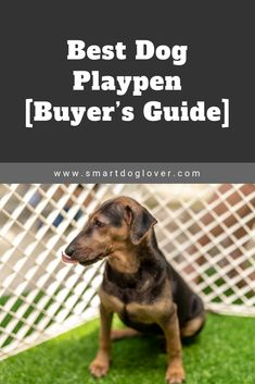 Dog Playpen Gate Large Dogs Dog Playpen With Tray Dog Training Books, Training Your Puppy, Cute Little Puppies, Little Dogs, Dog Playpen Indoor, Dog Hacks, Sleeping Dogs, Pet Puppy, Large Dogs