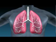 Idiopathic Pulmonary Fibrosis (IPF) differential diagnoses - YouTube