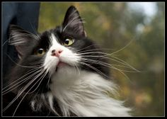 That Look... | Flickr - Photo Sharing!