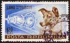 Η αλήθεια για το σκυλί - αστροναύτης: Πώς έγινε πείραμα από τους Ρώσους | cretaone