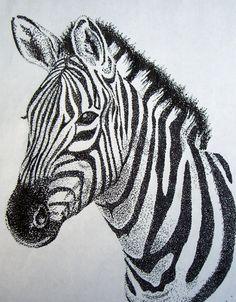 Zebra sketch.