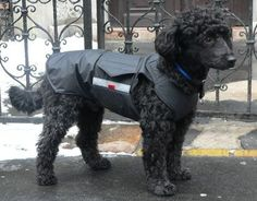 Winter Dog Coat  Dog Jacket  Custom made warm dog by PepperPetWear
