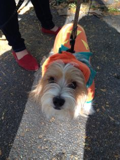 Mutt Strut for CCR.  A happy pup!