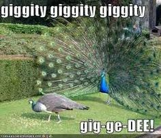 Image result for peacock and hen