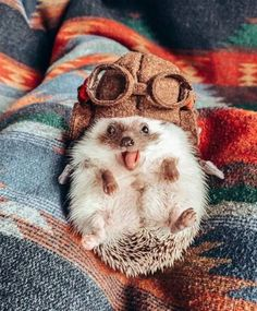 I heard the you might had a bad day so heres a cute hedgehog Baby Animals Super Cute, Cute Little Animals, Cute Funny Animals, Cutest Animals, Cutest Pets, Baby Animals Pictures, Cute Animal Photos, Funny Animal Pictures, Adorable Pictures