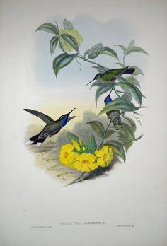 hummingbird angel - Google Search