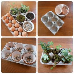 DIY succulent garden in egg carton. Dagmar's Home. DagmarBleasdale.com #Easter #gardening #DIY #upcycling #succulents #recycling #spring