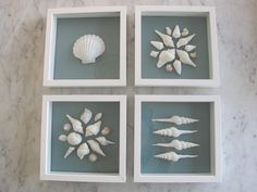 DIY- Shell Artwork * Displaying shells * from georgica pond Sea Crafts, Diy And Crafts, Arts And Crafts, Seashell Art, Seashell Crafts, Seashell Projects, Driftwood Projects, Driftwood Art, Shell Display