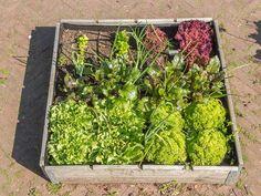 esto es todo lo que puedes sembrar en tan slo un metro cuadrado de tierra