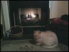 fatty loves the fire