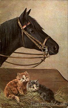 Horse & Cats Horses