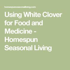 Using White Clover for Food and Medicine - Homespun Seasonal Living