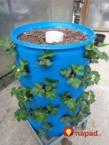 Organic Gardening Ideas a whole strawberry patch in a 55 gallon drum. ^i was going to do that with a garbage can and put a blueberry bush in the middle. Diy Garden, Lawn And Garden, Garden Projects, Garden Landscaping, Garden Club, Organic Gardening, Gardening Tips, Gardening Quotes, Vegetable Gardening