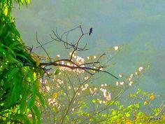 Humming bird enjoying the sun