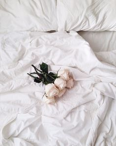 white, rose, and flowers image Aesthetic Colors, Aesthetic Pictures, Aesthetic Outfit, Flower Aesthetic, Aesthetic Vintage, Black And White Aesthetic, White Wallpaper, Mystic Messenger, Picture Wall
