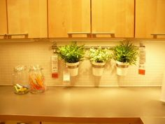 With a grow light under the counter -- great way to grow kitchen herbs.