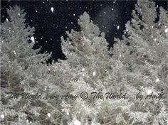Flocked Trees Photography Print by worldbyamy on Etsy, $20.00