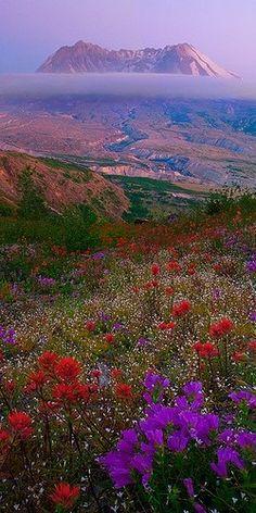 Mount St Helens Wildflowers...