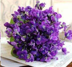 Violetas .