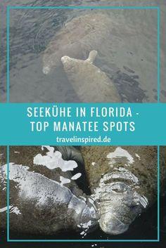 Die besten Orte in Florida, um Seekühe in freier Wildbahn zu beobachten! Top manatee viewing spots in Florida!