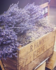 Lavender for sale at Borough Market. London. Click through to purchase prints.