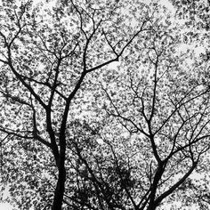 """Saatchi Art Artist Stefan Breton Black and white photography """"Asia Tree""""  Prints available at the Saatchi Gallery - http://www.saatchiart.com/art/Photography-Asia-Tree/289389/2187151/view"""