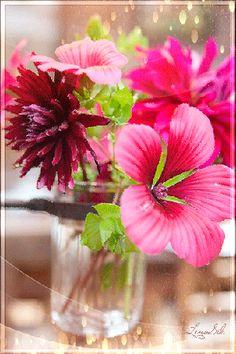 Decent Image Scraps: Flowers 3