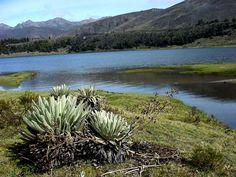 La laguna de Mucubají, en el parque Sierra Nevada, es de origen glacial y tiene unos diez mil años de antigüedad.. Estado Mérida, Venezuela.
