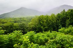 The Smoky Mountains get so green in the summer