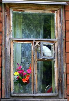Cat in a neat window.