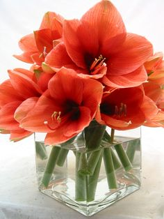 This is a cube vase floral arrangement that features salmon amaryllis.  See our entire selection at www.starflor.com.  To purchase any of our floral selections, as gifts or décor, please call us at 800.520.8999 or visit our e-commerce portal at www.Starbrightnyc.com. This composition of flowers is generally available for same day delivery in New York City (NYC). SQ116