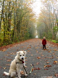 Experiencing Fall on the Snoqualmie Valley Trail in Carnation, WA