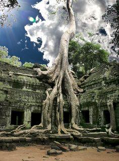 Tah Prohm - Angkor, Cambodia