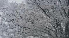 I love the winter.