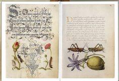 Книга со старинными картинками и письменами.. Обсуждение на LiveInternet - Российский Сервис Онлайн-Дневников