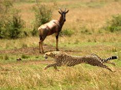Wildlife Sanctuaries in Telangana, India, Forests in Telangana