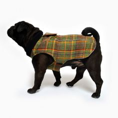 www.chezvalde.com Jumpin Jaxx - Wuthering Heights Wuthering Heights, Dogs, Clothing, Outfits, Pet Dogs, Doggies, Outfit Posts, Kleding, Clothes