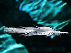 Une plume pour écrire des mots bleu - null
