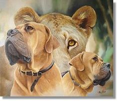 """Boerboel """"a farmer's dog"""" - history behind and characteristics of the breed. (Glorious!)"""