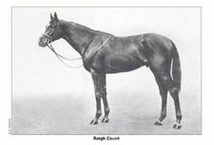 Reigh Count (1925–1948) American Hall of Fame Thoroughbred racehorse chestnut stallion bred in Virginia sired by Sunreigh who won the 1928 Kentucky Derby and the 1929 Coronation Cup in England.
