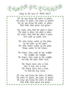 This rhyme introduces children to the parts of the plants. When going to the original site you are able to find other cool activities that you can incorporate into your lesson such as taking white carnations and putting them into water with food colouring 1st Grade Science, Kindergarten Science, Science Classroom, Teaching Science, Science Activities, Classroom Images, Classroom Ideas, Plant Lessons, Science Lessons