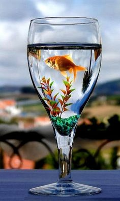 Single-tail goldfish need gallons PER FISH and good filtration. A pond is the best choice for them. They're social fish and should be kept with 2 or more other goldfish. This doesn't provide any of those. Ocean Themes, Beach Themes, Fish Centerpiece, Yellow Centerpieces, Glass Repair, Belle Photo, Under The Sea, Wedding Centerpieces, Good Morning