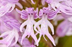 Un fiore che assomiglia ad un uomo... ehm...!! Ahahah ! (clicca la foto)
