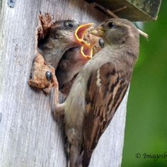Sparrow feeding time 5x7 photo note card from Images by Merrilyn for $4.00
