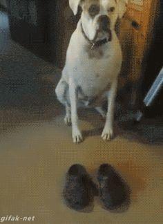 Como Eu Me Sinto Quando... …usando um par de sapatos novos pela primeira vez.