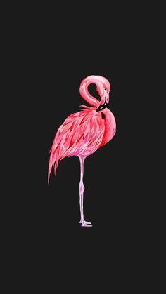 Wallpaper flamingo The post Wallpaper flamingo appeared first on Wallpapers. Wallpaper flamingo The post Wallpaper flamingo appeared first on Wallpapers. Tier Wallpaper, Black Phone Wallpaper, Homescreen Wallpaper, Animal Wallpaper, Cellphone Wallpaper, Cool Wallpaper, Wallpaper Backgrounds, Iphone Wallpaper, Flamingo Painting